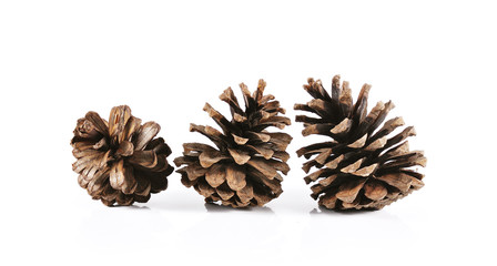 pine cones close up isolated on white background.