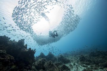 Unterwasser - Riff - Fisch - Fischschwarm - Tauchen - Curacao - Karibik - Taucher