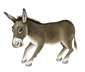 Funny Donkey. Watercolor