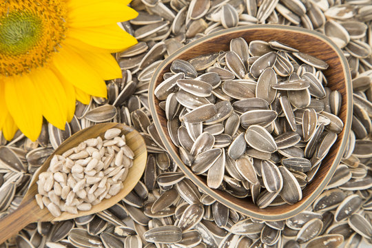 Rich and nutritious sunflower seeds