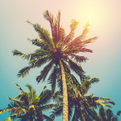 Tropical coconut tree. Vintage filter