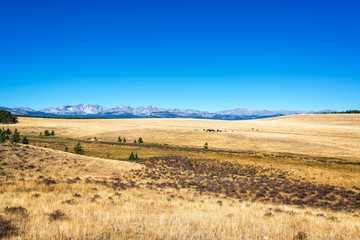 Dry fields with the Bighorn Mountains visible in the background near Buffalo, Wyoming