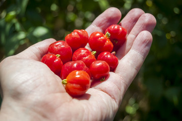 Pitanga (Suriname cherry, Brazilian cherry or Cayenne cherry) stock image