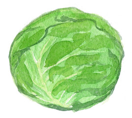 Watercolor illustration of cabbage