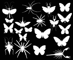 collection with twenty white insects