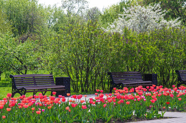 MOSCOW, RUSSIA - MAY 06, 2016: Blooming tulips in the spring par