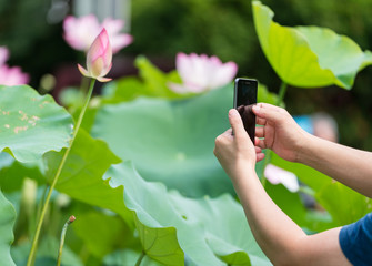 use phone to take the photos of lotus