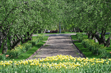 MOSCOW, RUSSIA - MAY 06, 2016: Old apple trees garden of Kolomen