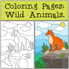 Coloring Pages: Wild animals. Little cute fox stands on the top of the rock
