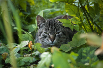 Tabby cat resting sit in foliage