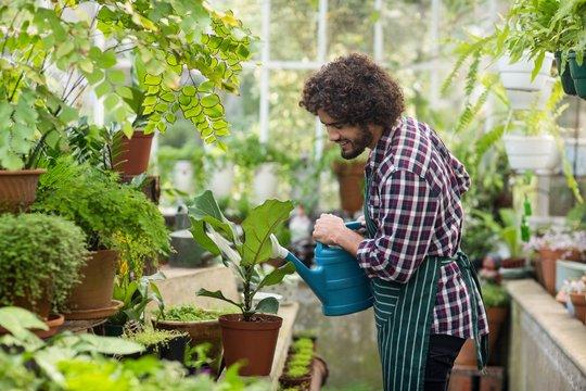 Male gardener watering plants at greenhouse
