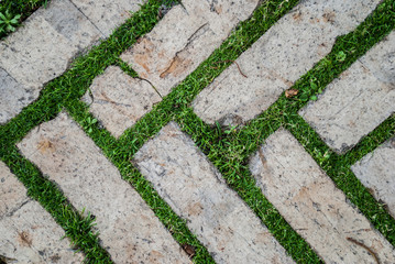 Old cobblestone background with grass / Brick with grass / tiles with grass / stone way in green grass / Bending garden stone path / garden stone path with grass