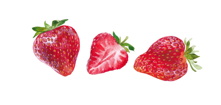 three strawberry on white background watercolor