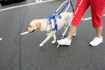 Blind woman and seeing eye dog crossing street