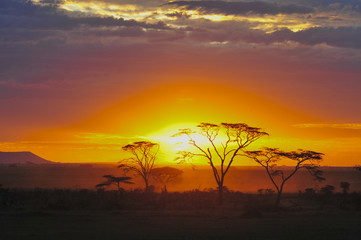 Silhouette of trees at sunset, serengeti plains, tanzania