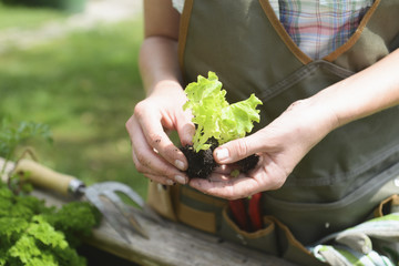 Woman planting vegetables in garden, close up