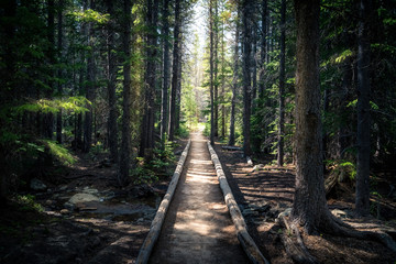 Landscape photo of a forest path.