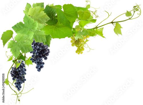 grappes de raisin et feuilles de vigne photo libre de droits sur la banque d 39 images fotolia. Black Bedroom Furniture Sets. Home Design Ideas