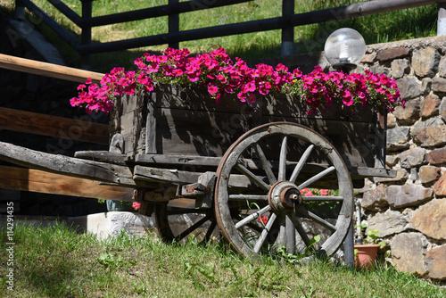 Giardino fioriere giardini fiori aiuola piante colorate for Piante colorate da giardino