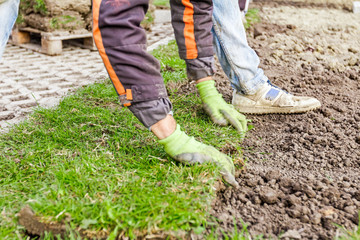 Unrolling grass, applying turf rolls for a new lawn