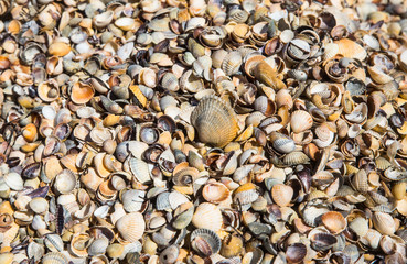 Брошенные ракушки своими обиталелями моллюсками