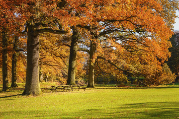The enchanting beauty of autumn park.