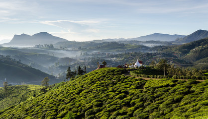 Tea Fields of Sri Lanka, Nuwara eliya