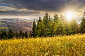 large meadow with herbs,  trees in mountain area at sunset