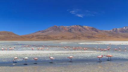 Paysage montagne Bolivie lac rouge avec flamants roses