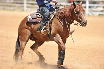The side view of the rider in leather chaps sliding his horse forward and raising up the