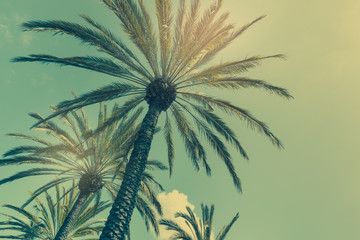 Palm trees in California. Retro color style, horizontal composition.
