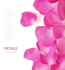 Pink rose petals isolated on white background with sample text