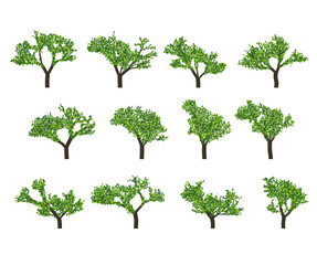 Silhouettes of trees on white background. Realistic green tree.