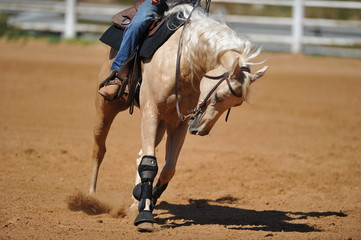 The front view of the rider sliding his horse forward