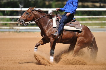 The side view of the rider sliding his horse forward and raising up the clouds of dust