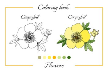 Coloring book with beautiful cinquefoil flower. Cartoon vector illustration for children education.
