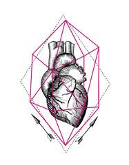 illustration anatomical heart