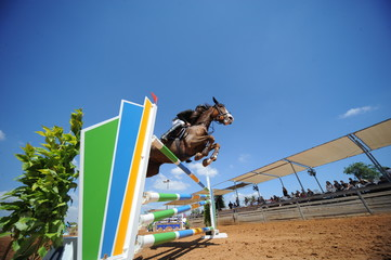 Bottom view on the horse jumping over obstacles with the rider on the horseback