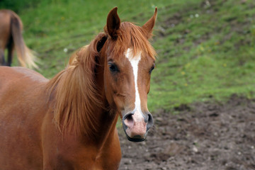 Pretty Young horse