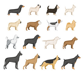 Vector dog breeds collection isolated on white