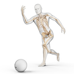 medically accurate 3d illustration of bowling player