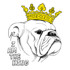 Picture of portrait of a dog (bulldog) in the crown. Vector illustration.