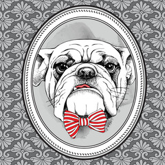 The picture in the frame with image of the dog Bulldog with bow. Vector illustration.