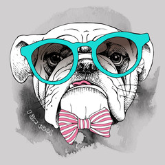Image of portrait of a dog (Bulldog) in a glasses. Vector illustration.