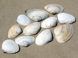 South Bethany the seashells 2016