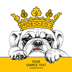 The poster of portrait bulldog in the crown. Vector illustration.