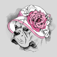 The image of the portrait Bulldog dog in the Summer hat with flower. Vector illustration.
