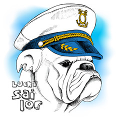 Image of portrait a dog bulldog in a sailor's cap. Vector illustration.
