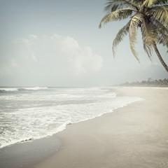 tropikalny tło - 114375664