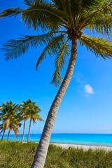 Fototapete - Key west florida Smathers beach palm trees US
